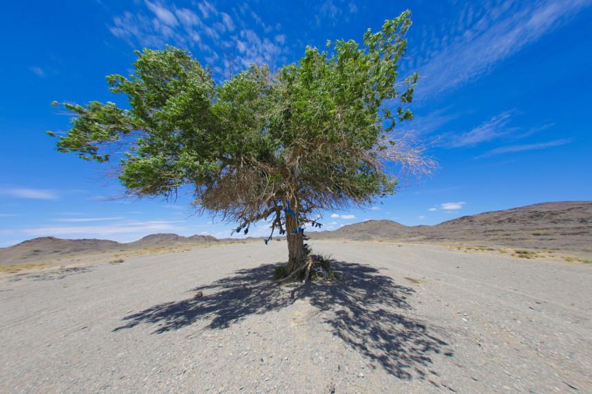 Одинокое дерево в пустыне